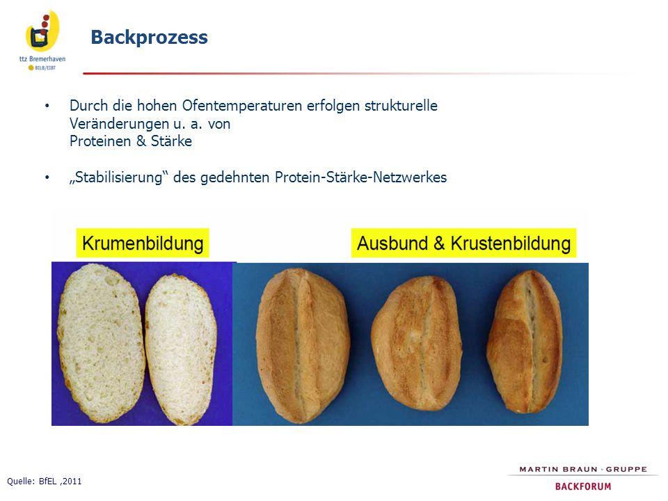 Backprozess Durch die hohen Ofentemperaturen erfolgen strukturelle Veränderungen u. a. von Proteinen & Stärke.