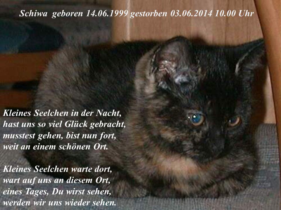 Schiwa geboren 14.06.1999 gestorben 03.06.2014 10.00 Uhr