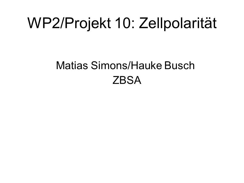 WP2/Projekt 10: Zellpolarität