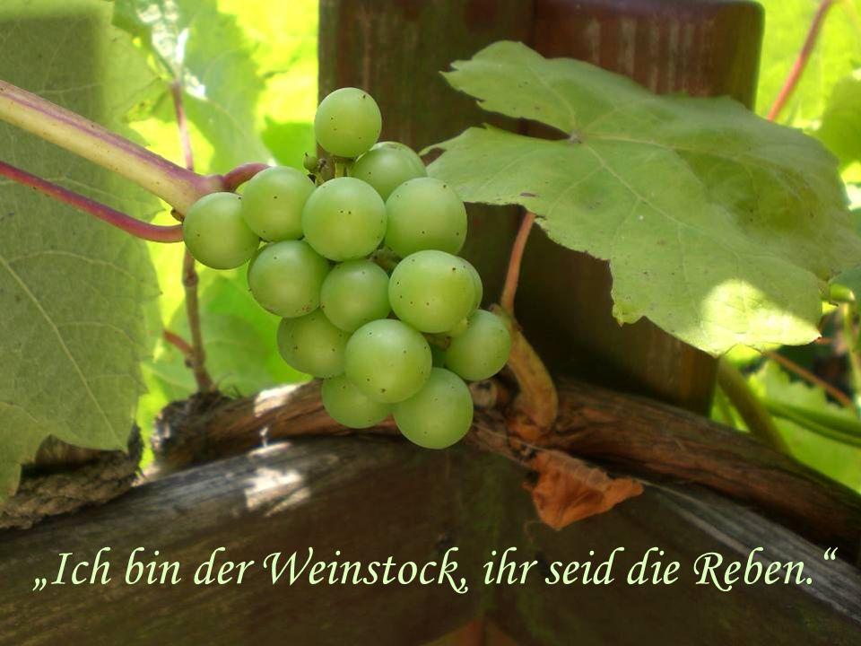 """""""Ich bin der Weinstock, ihr seid die Reben."""