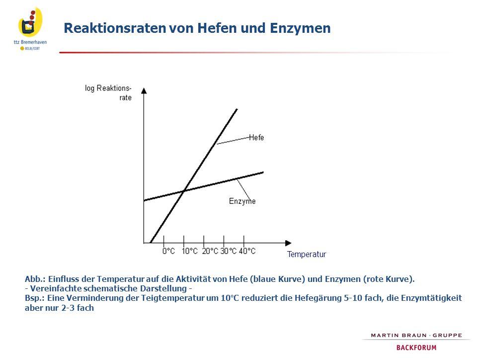 Reaktionsraten von Hefen und Enzymen