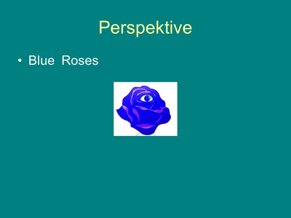 Perspektive Blue Roses