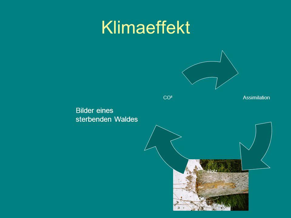Klimaeffekt Bilder eines sterbenden Waldes