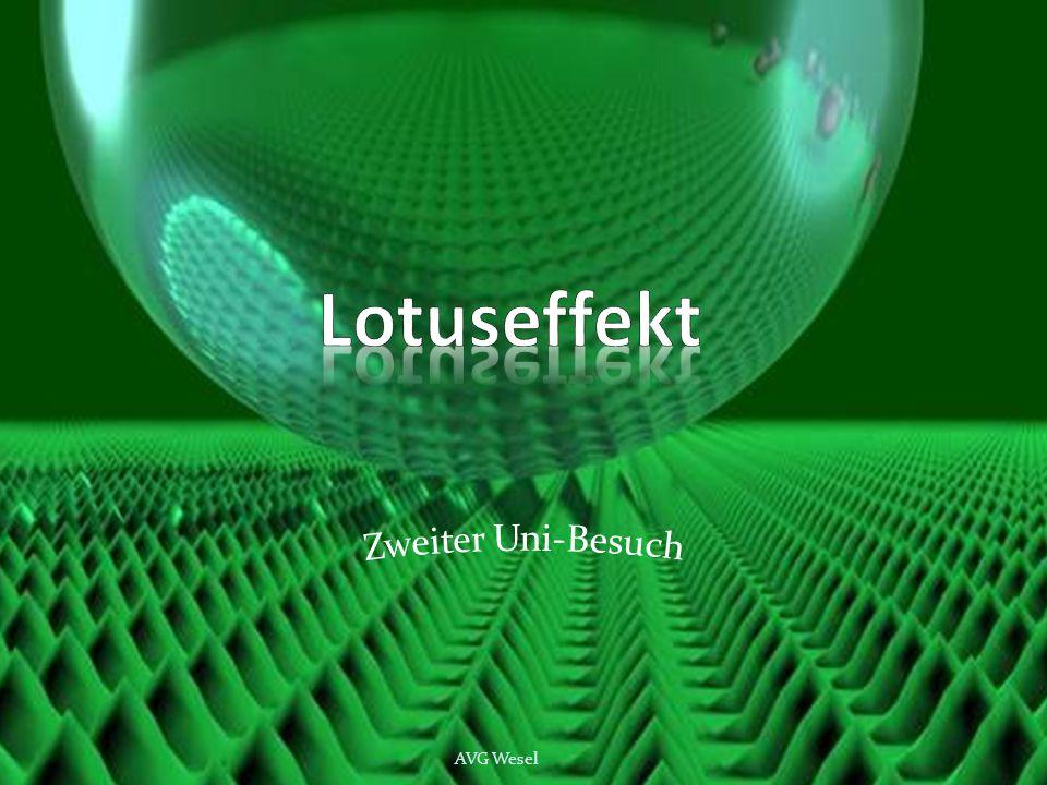 Lotuseffekt Zweiter Uni-Besuch AVG Wesel