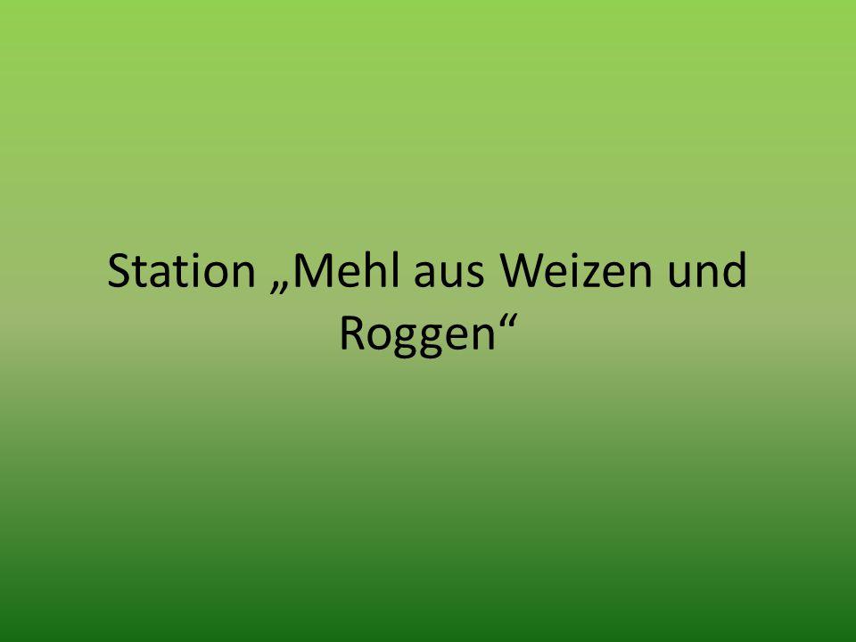 """Station """"Mehl aus Weizen und Roggen"""