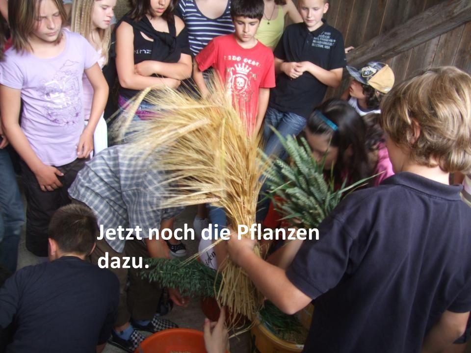 Jetzt noch die Pflanzen dazu.