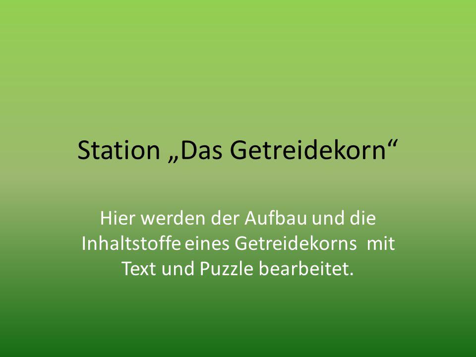 """Station """"Das Getreidekorn"""