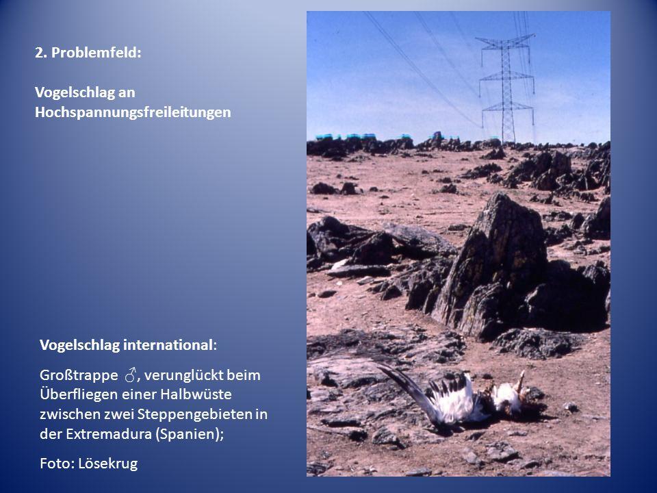 2. Problemfeld: Vogelschlag an Hochspannungsfreileitungen. Vogelschlag international:
