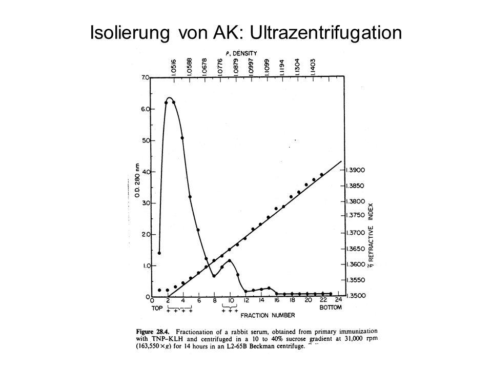 Isolierung von AK: Ultrazentrifugation