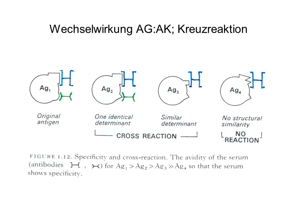 Wechselwirkung AG:AK; Kreuzreaktion