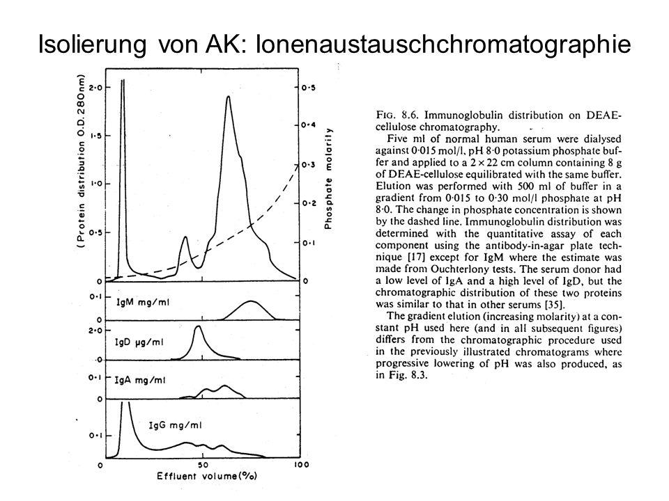 Isolierung von AK: Ionenaustauschchromatographie