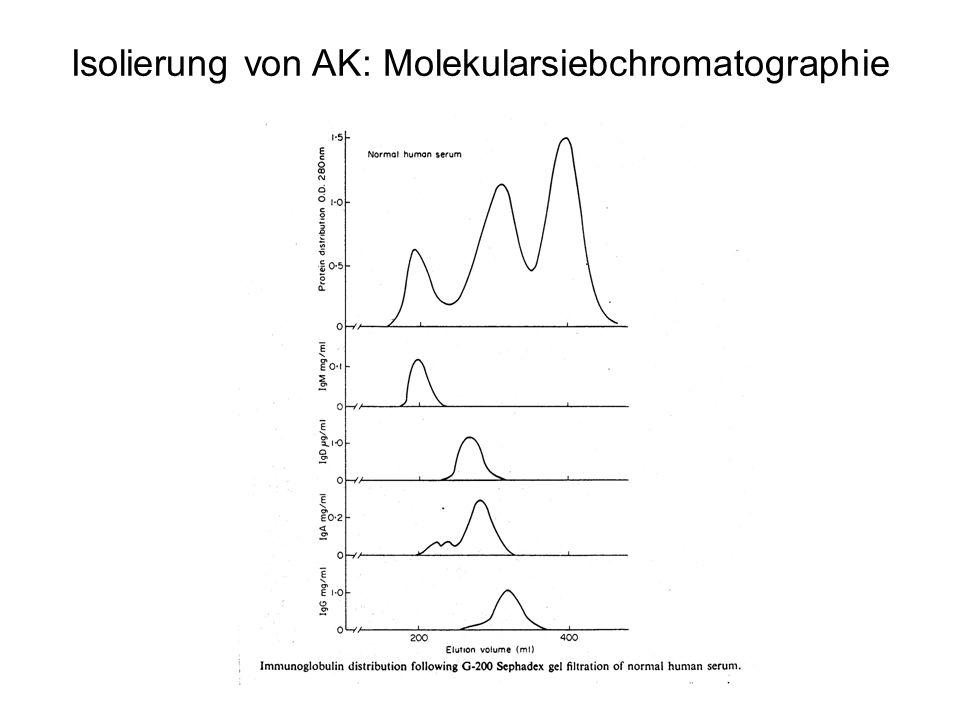 Isolierung von AK: Molekularsiebchromatographie
