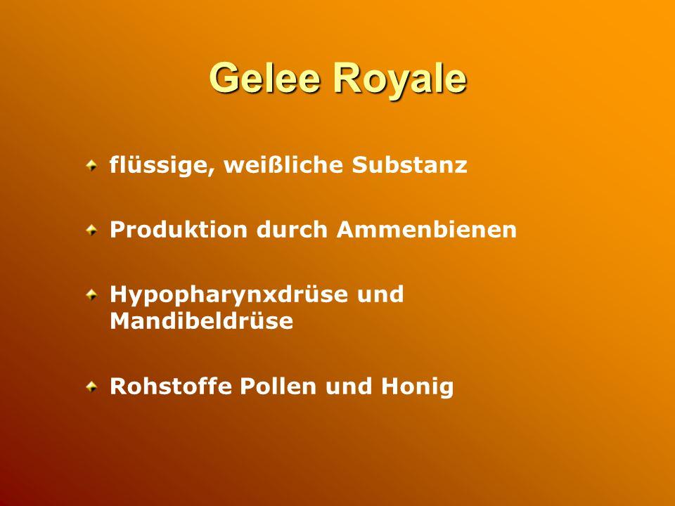Gelee Royale flüssige, weißliche Substanz Produktion durch Ammenbienen