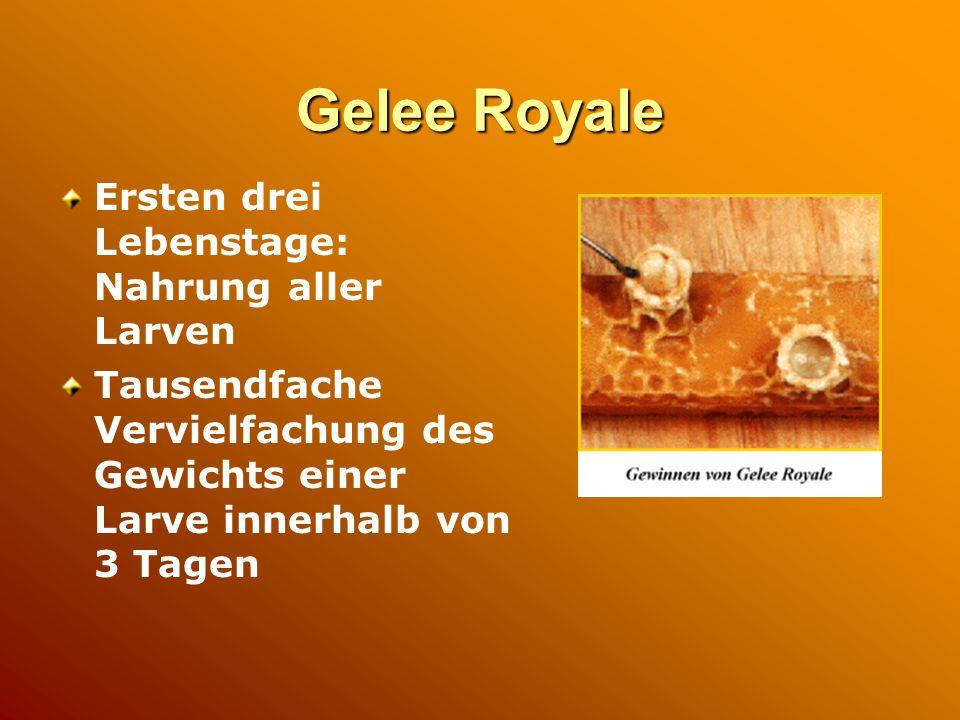 Gelee Royale Ersten drei Lebenstage: Nahrung aller Larven