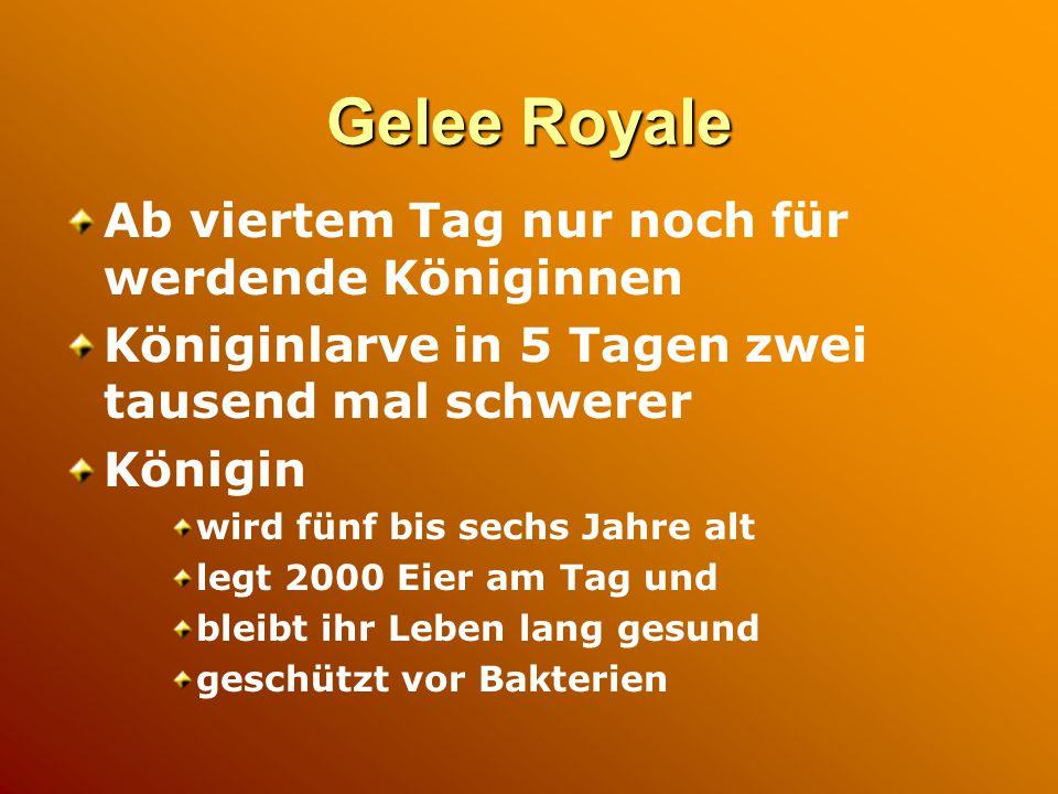 Gelee Royale Ab viertem Tag nur noch für werdende Königinnen