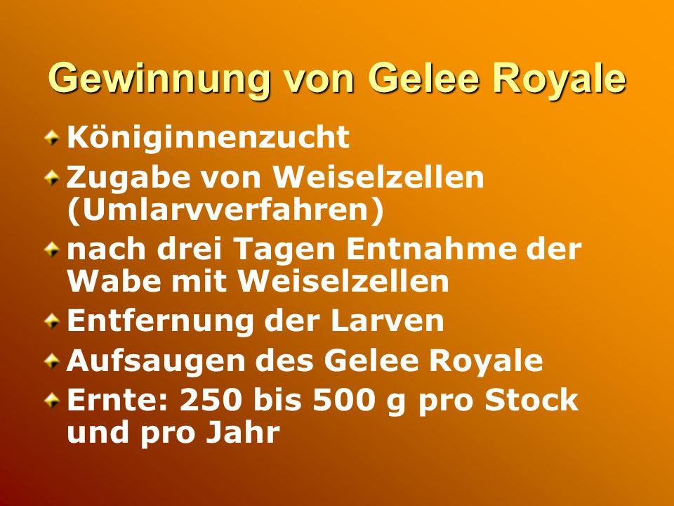 Gewinnung von Gelee Royale