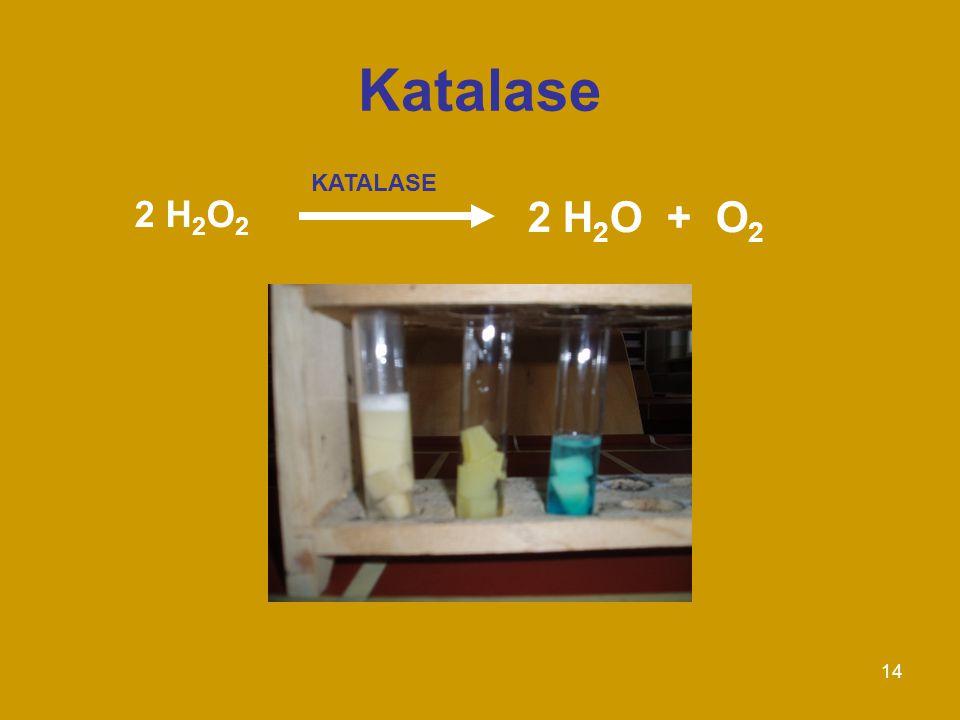 Katalase KATALASE 2 H2O2 2 H2O + O2