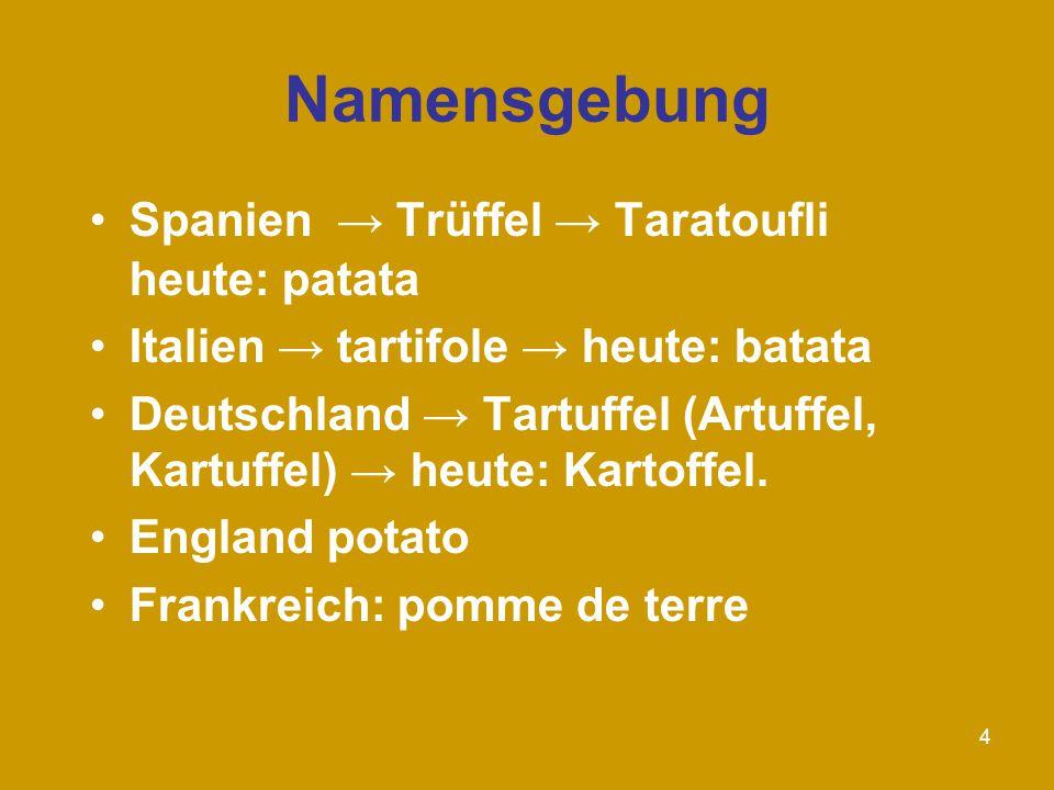 Namensgebung Spanien → Trüffel → Taratoufli heute: patata