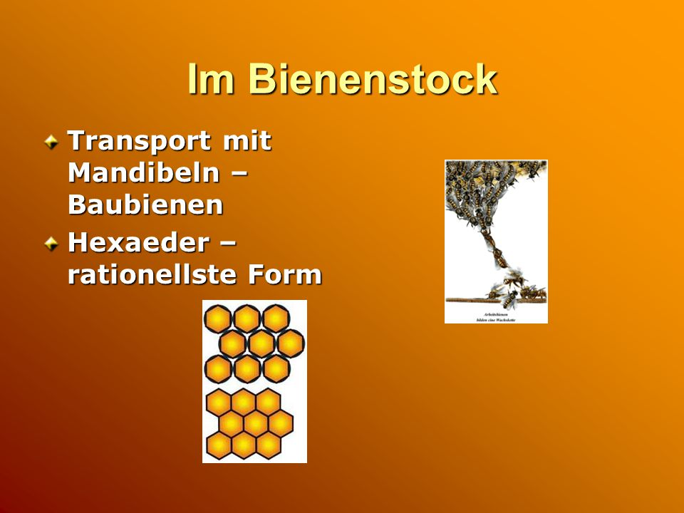 Im Bienenstock Transport mit Mandibeln – Baubienen