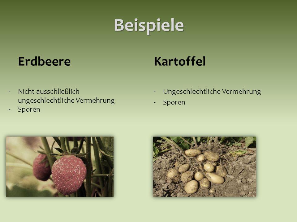 Beispiele Erdbeere Kartoffel