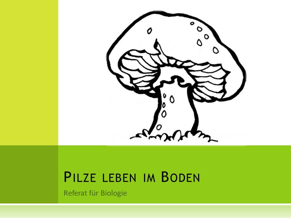 Pilze leben im Boden Referat für Biologie
