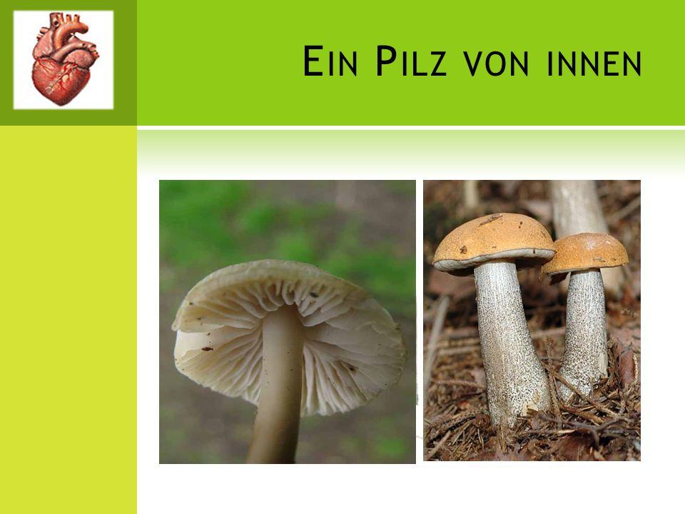 Ein Pilz von innen