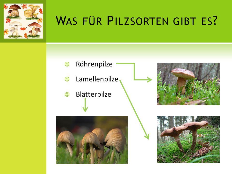 Was für Pilzsorten gibt es