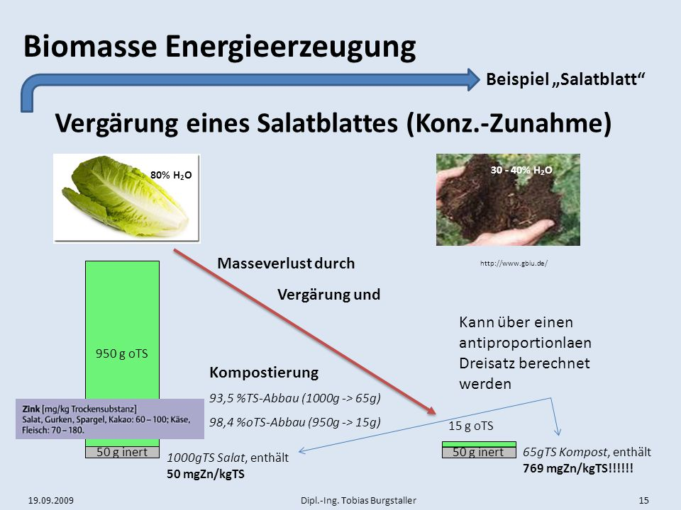 Vergärung eines Salatblattes (Konz.-Zunahme)