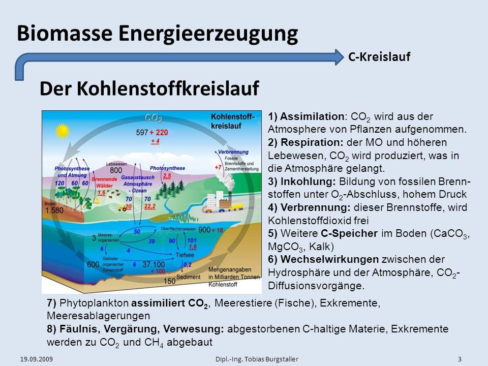 Der Kohlenstoffkreislauf