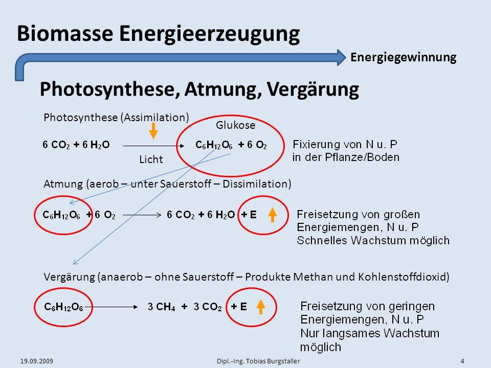 Photosynthese, Atmung, Vergärung