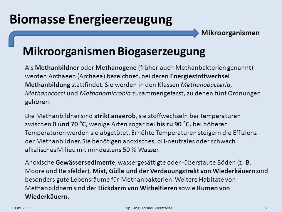 Mikroorganismen Biogaserzeugung
