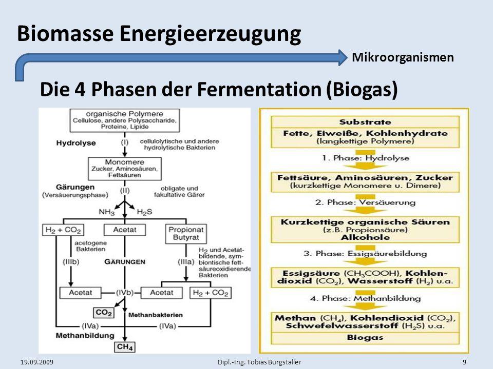 Die 4 Phasen der Fermentation (Biogas)