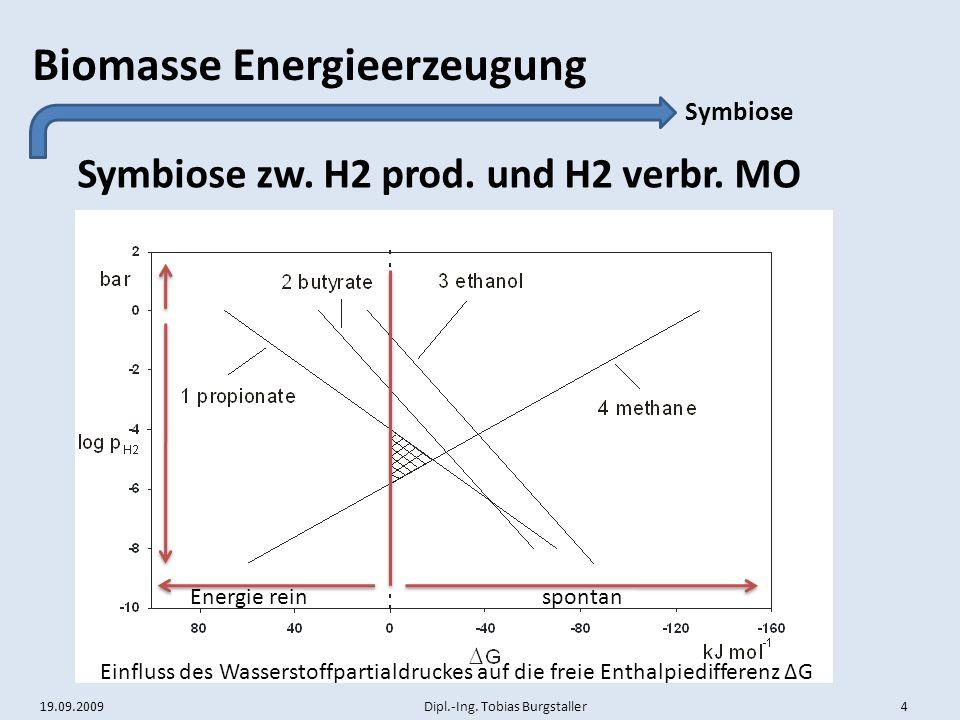 Symbiose zw. H2 prod. und H2 verbr. MO