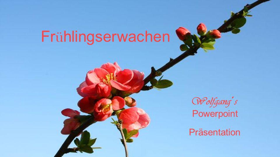 Frühlingserwachen Wolfgang´s Powerpoint Präsentation
