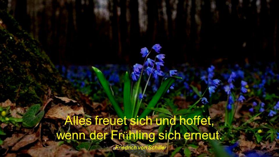 Alles freuet sich und hoffet, wenn der Frühling sich erneut.