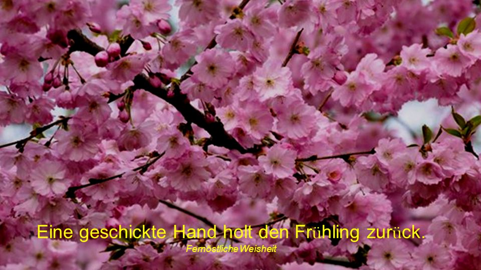 Eine geschickte Hand holt den Frühling zurück.