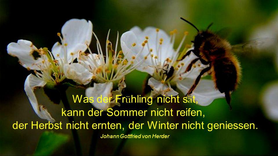 Was der Frühling nicht sät, kann der Sommer nicht reifen,