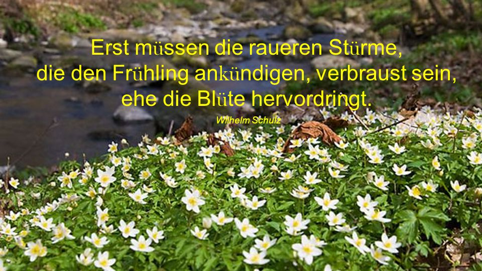 Erst müssen die raueren Stürme, die den Frühling ankündigen, verbraust sein, ehe die Blüte hervordringt.