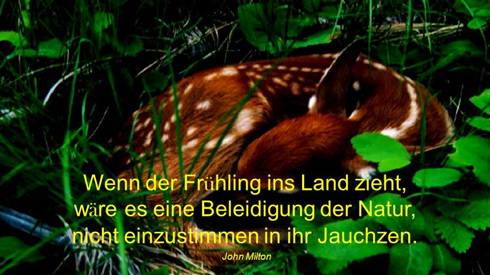Wenn der Frühling ins Land zieht, wäre es eine Beleidigung der Natur, nicht einzustimmen in ihr Jauchzen.