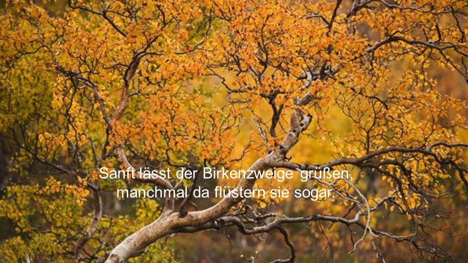 Sanft lässt der Birkenzweige grüßen, manchmal da flüstern sie sogar.