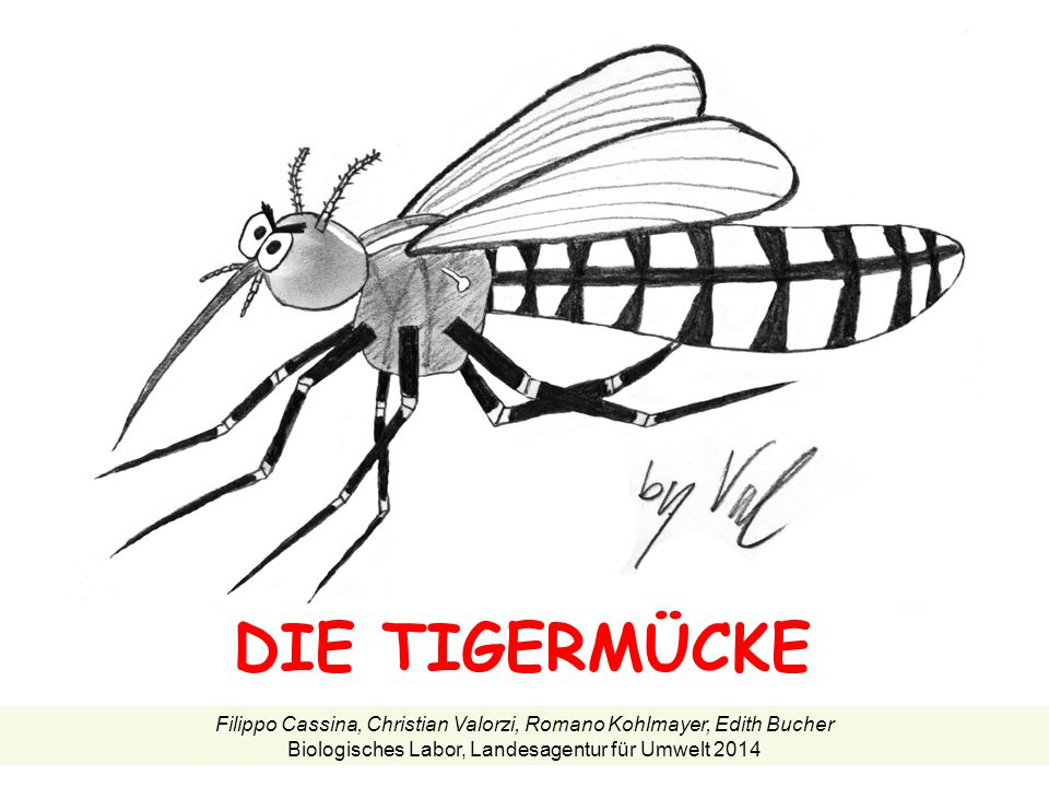 DIE TIGERMÜCKE Filippo Cassina, Christian Valorzi, Romano Kohlmayer, Edith Bucher.
