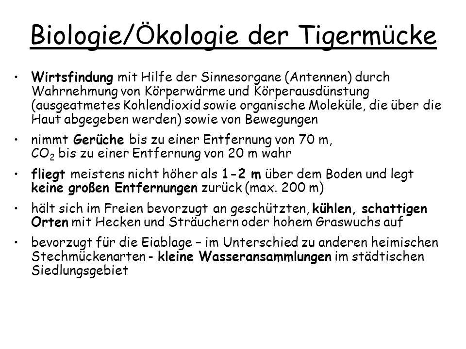 Biologie/Ökologie der Tigermücke