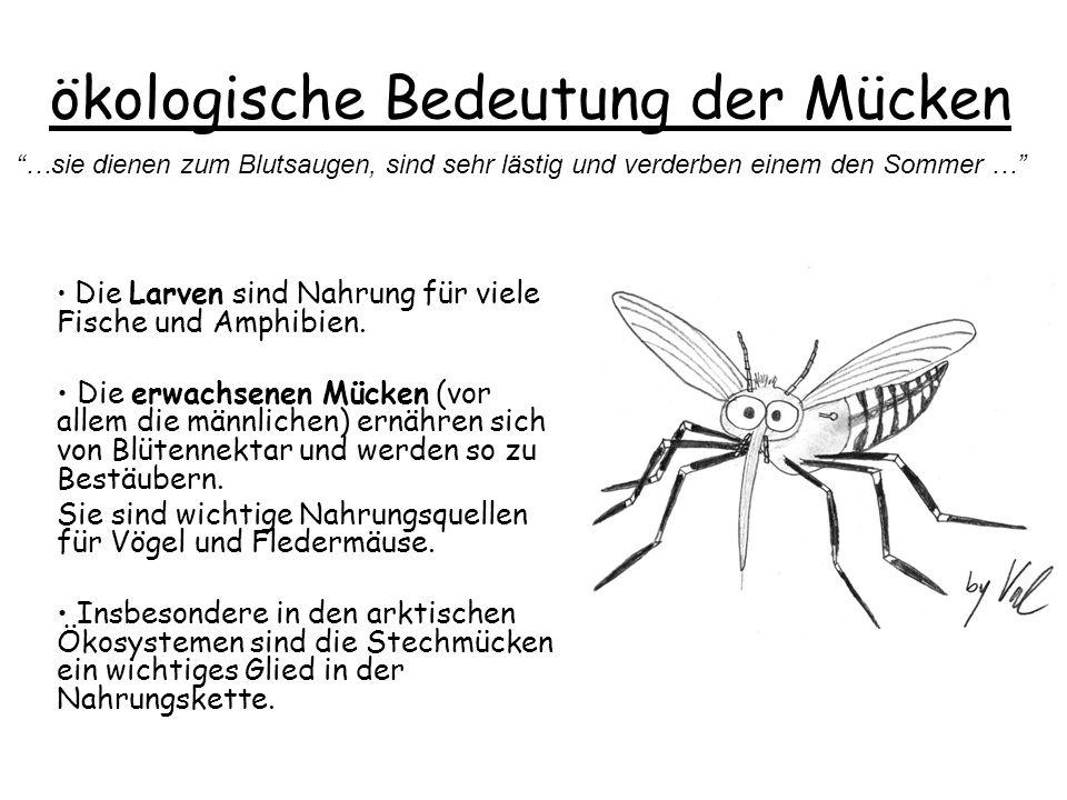 ökologische Bedeutung der Mücken