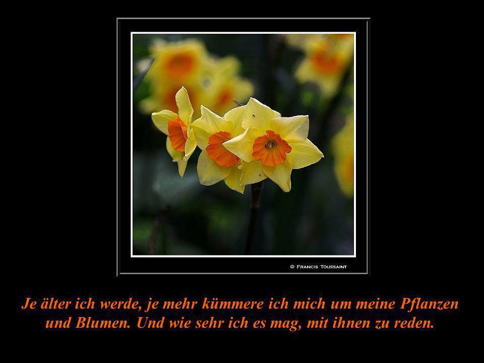 Je älter ich werde, je mehr kümmere ich mich um meine Pflanzen und Blumen.