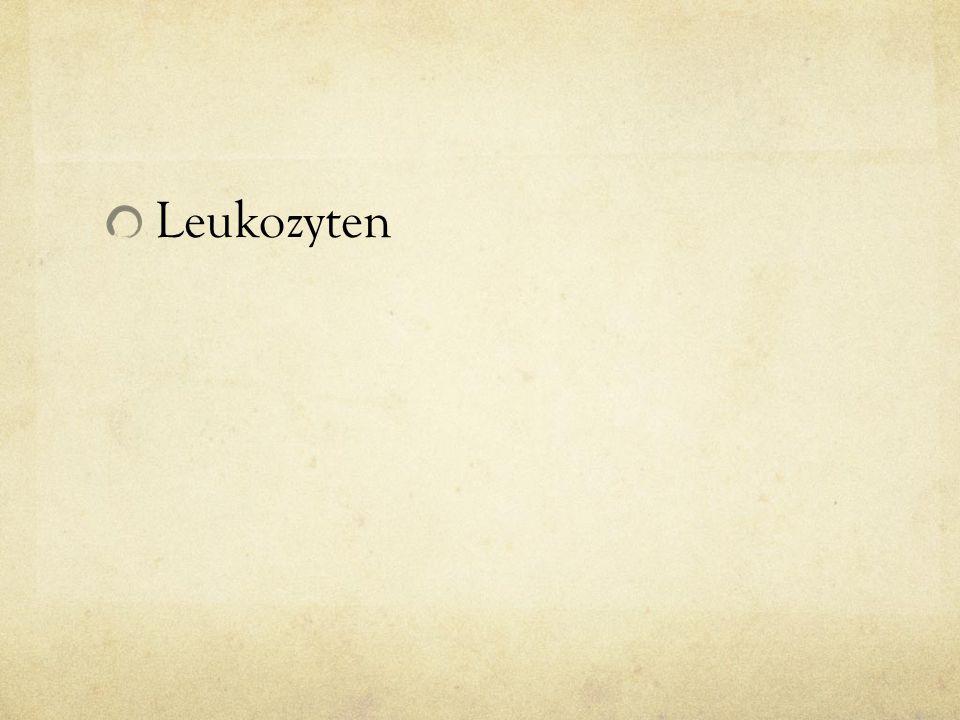 Leukozyten