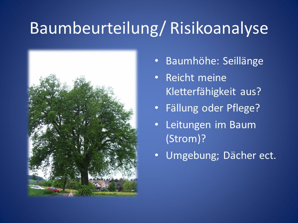 Baumbeurteilung/ Risikoanalyse