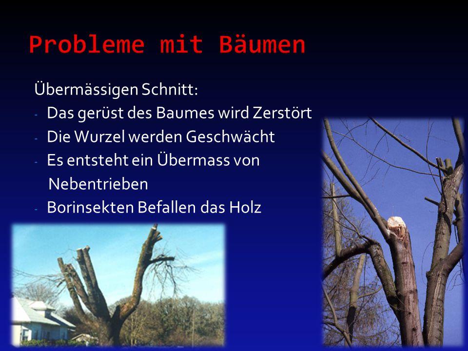 Probleme mit Bäumen Übermässigen Schnitt: