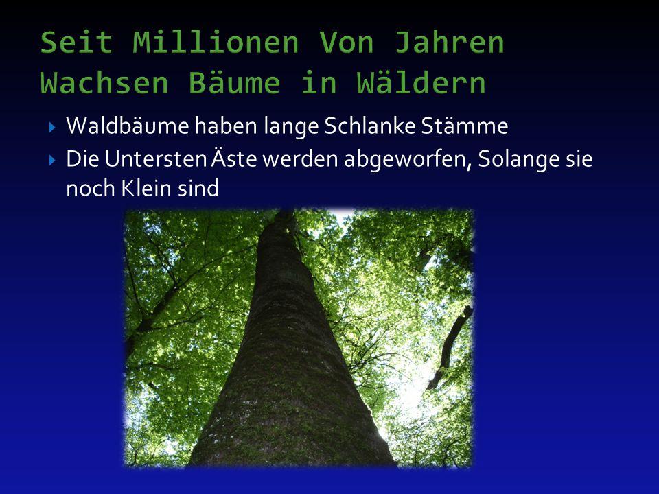 Seit Millionen Von Jahren Wachsen Bäume in Wäldern