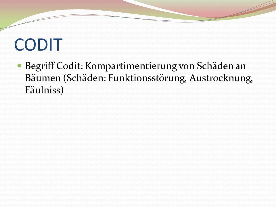 CODIT Begriff Codit: Kompartimentierung von Schäden an Bäumen (Schäden: Funktionsstörung, Austrocknung, Fäulniss)
