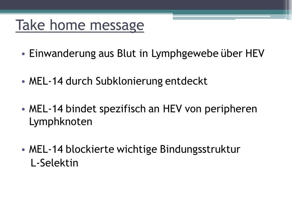 Take home message Einwanderung aus Blut in Lymphgewebe über HEV